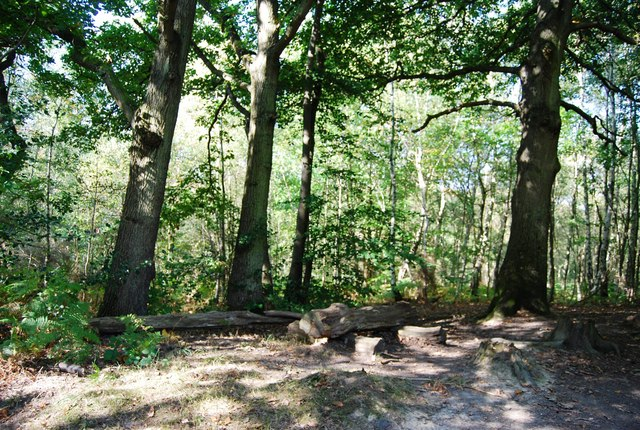 Rustic bench by the path, Hurst Wood
