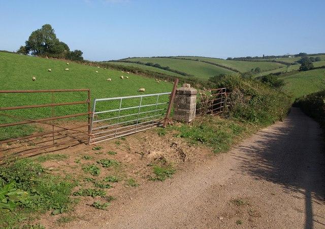 Multiple gates by the lane, Kingston