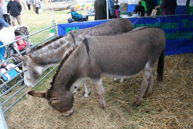Donkeys at the show