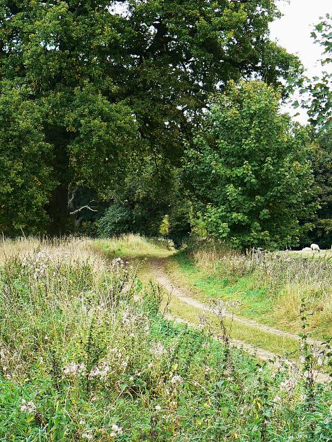 Byway, near Finstock