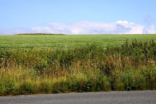 Arable field near Widemouth Bay