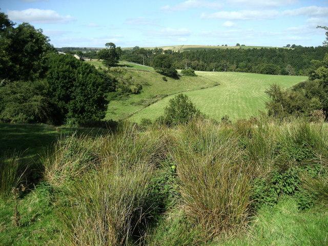 Field below Towler Hill