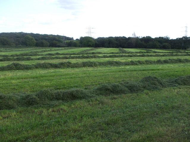 Freshly mown field