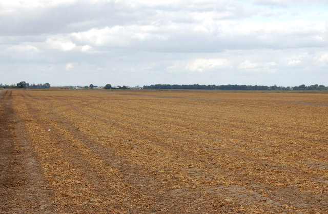 Wide fenland landscape on Poplar Farm (1)