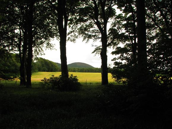 Barley field, Seafield Estate Cullen