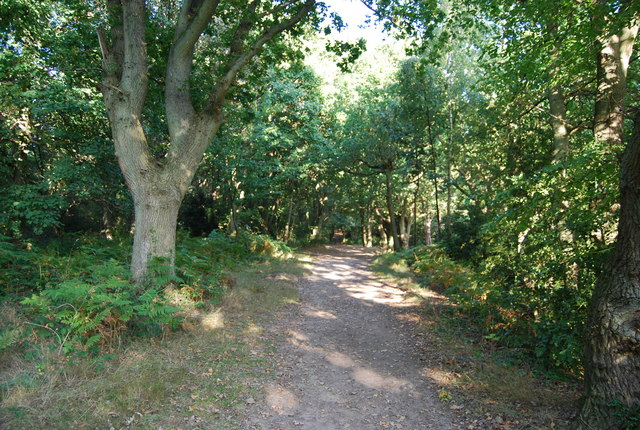 Footpath across the top of Happy Valley, Rusthall Common