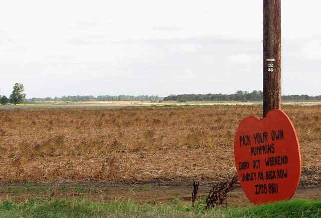 View across potato field