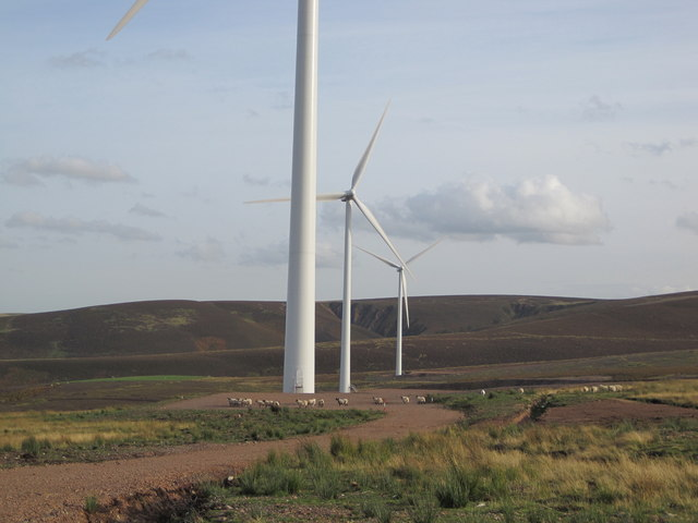 Sheep and turbines, East Lammermuir Deans