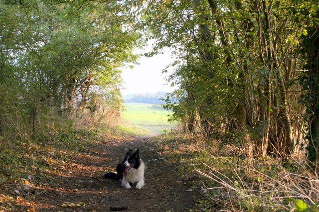 Footpath below Lodge Hill