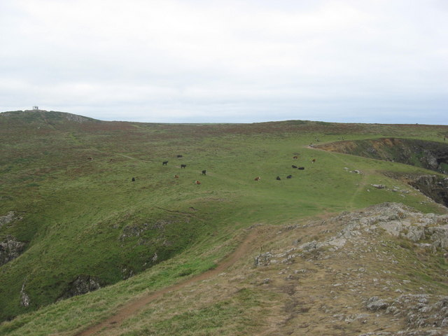 Cattle grazing on the top of Wooltack Point
