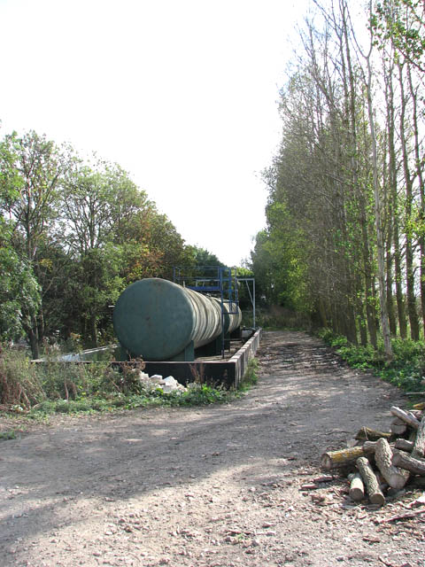 A row of poplars beside farm track