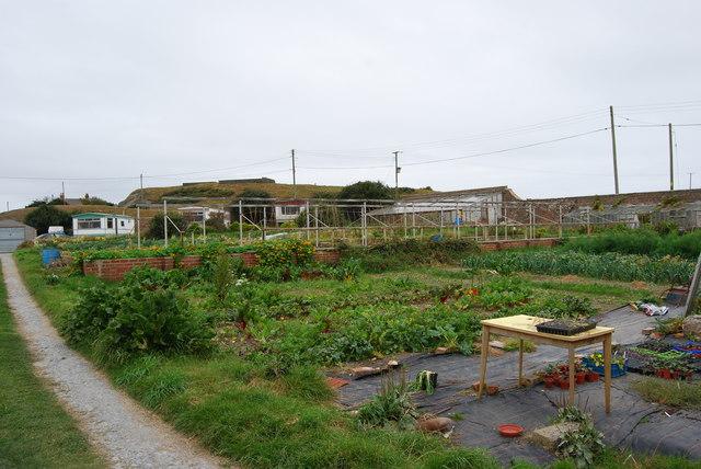 Ynyslas Community Market Garden