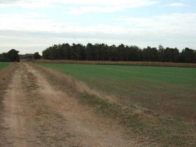 Farm track to Perrys Wood, Dersingham
