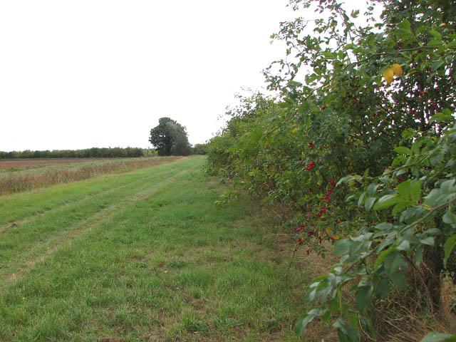 Hedgerow beside farm track