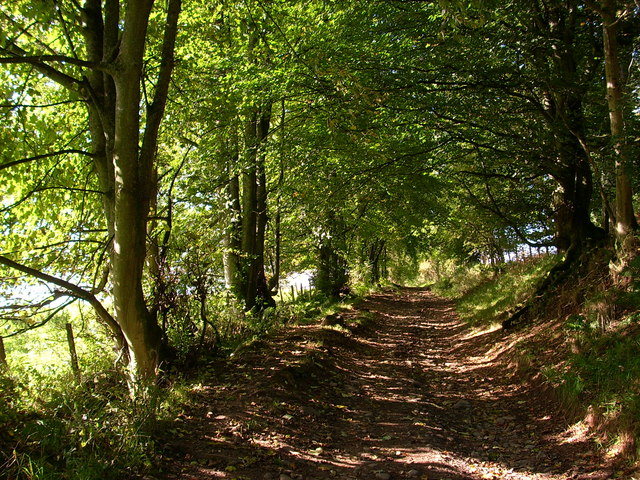 Track through the woodland at the foot of Great Mell Fell