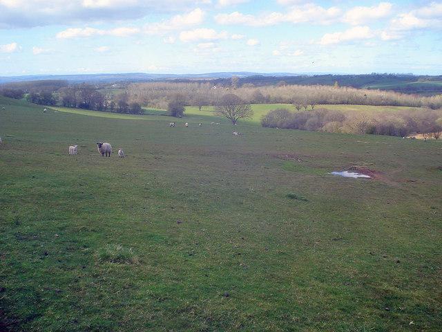 Sheep pasture north of Hegdon Hill