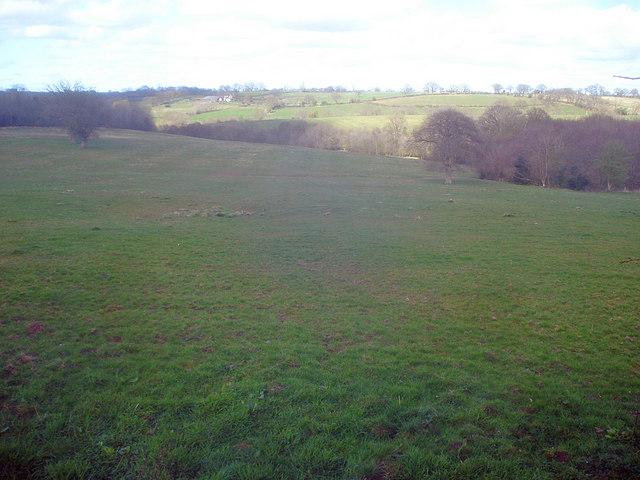 Sheep pasture near Marston Firs