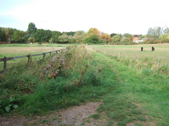 Grazing near Dersingham