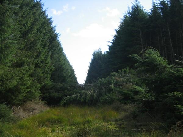 Bridleway blocked by fallen trees