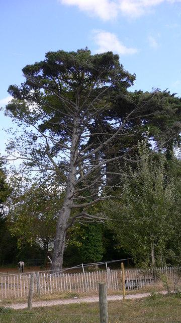 Tree by footpath at  Mengham