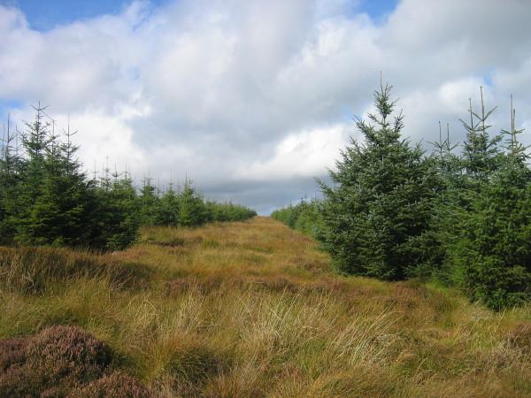 Bridleway near White Hill