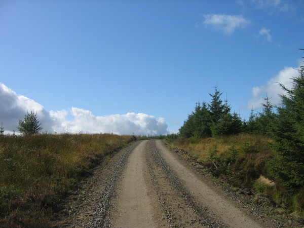 Forest road near White Hill