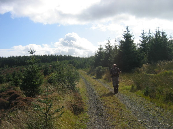 Forest road towards White Hill