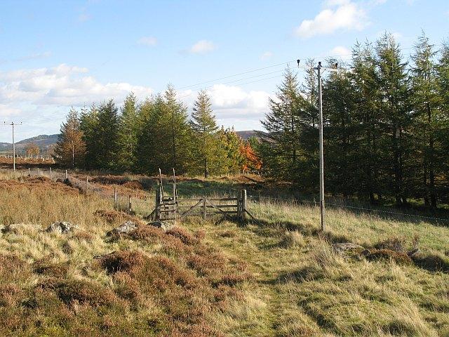 Woodland, Drumour
