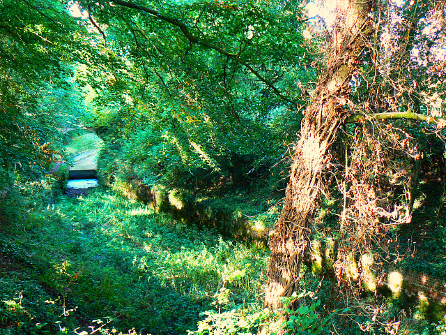 Thames and Severn Canal, north-east of Tarlton