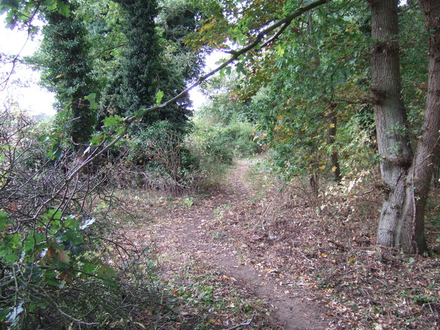 Path in the woods, Snettisham