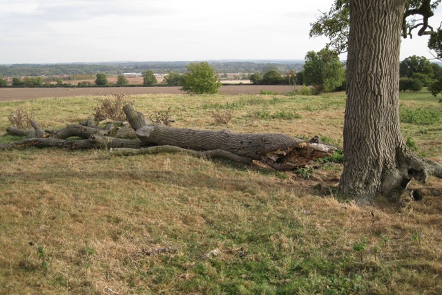 Fallen ash bough on grazing land east of Hampton on the Hill