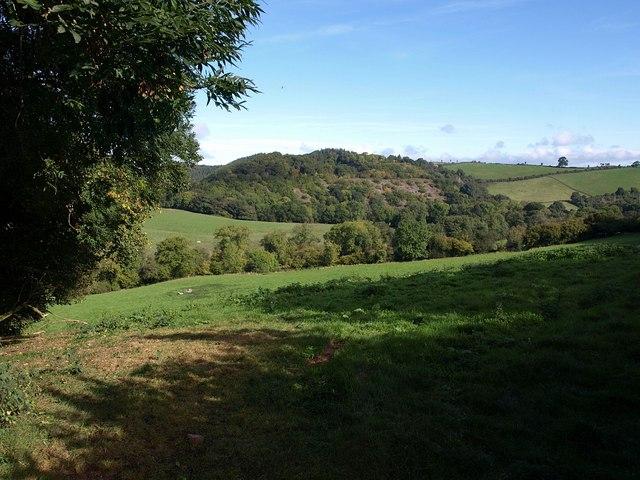 Field by Deepleigh Lane