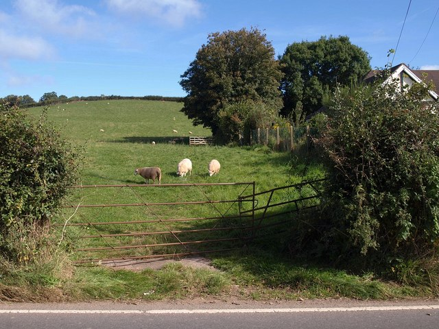 Sheep at Langley