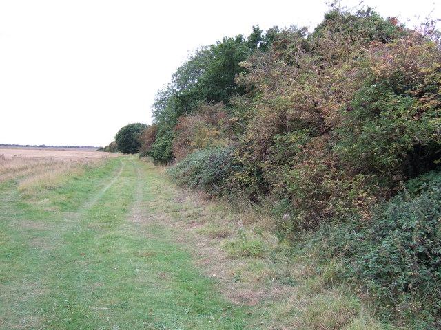 Bushes and track near Ingoldisthorpe Common