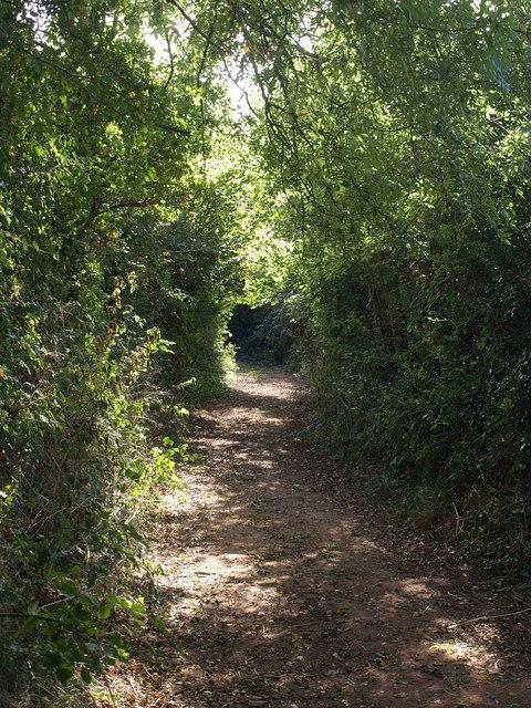 Yard Lane