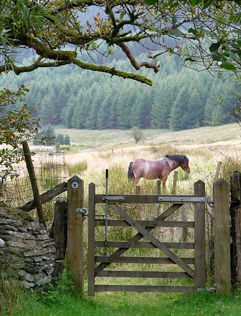 Bridleway gate at Dolgoch, Ceredigion