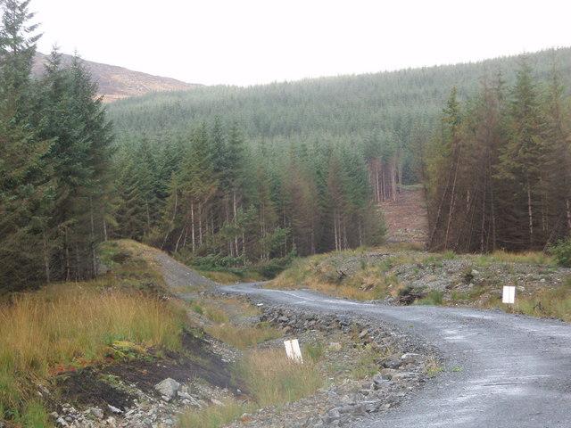 Forest track leading towards Dernscloy