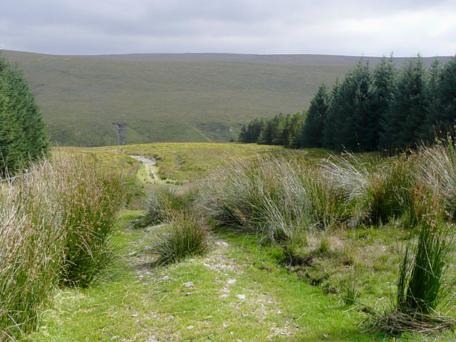 Track to Drum Nantygorlan, Powys