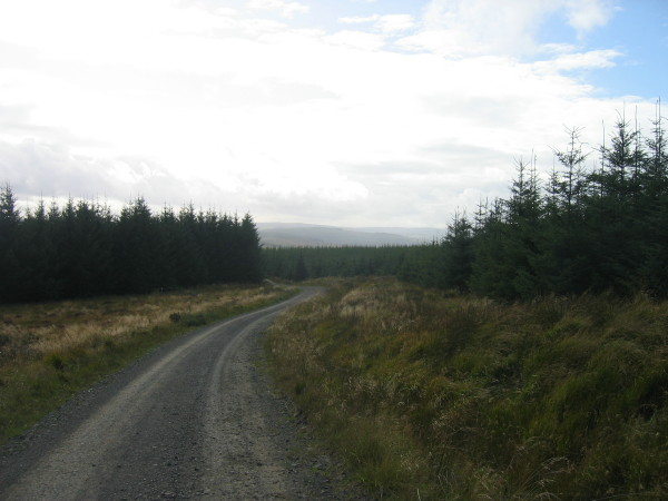 Forest road towards Falstone
