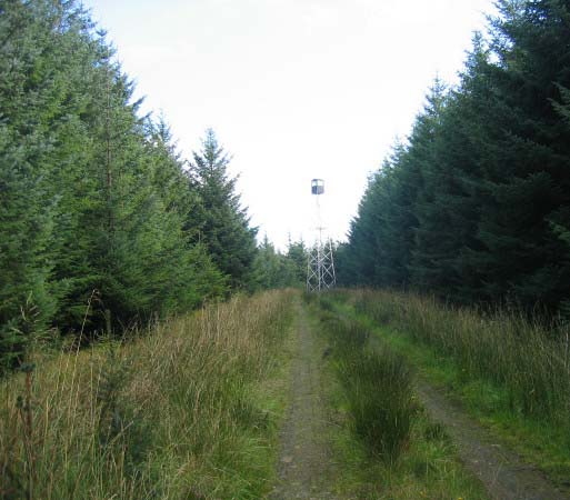 Forest road leading to Fire Observation Tower