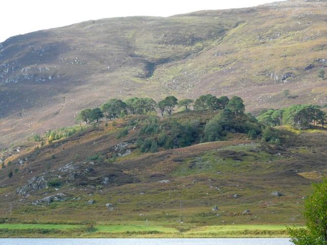 Hillside by Loch Carrie.
