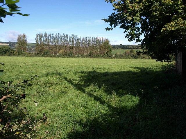 Meadow, Wiveliscombe