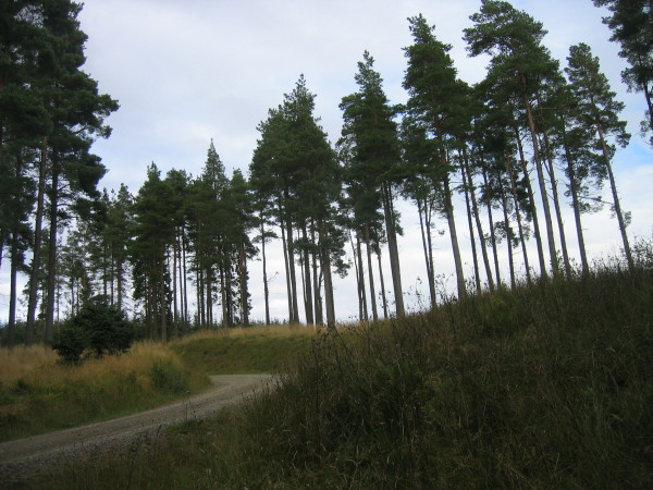 Forest road near Falstone