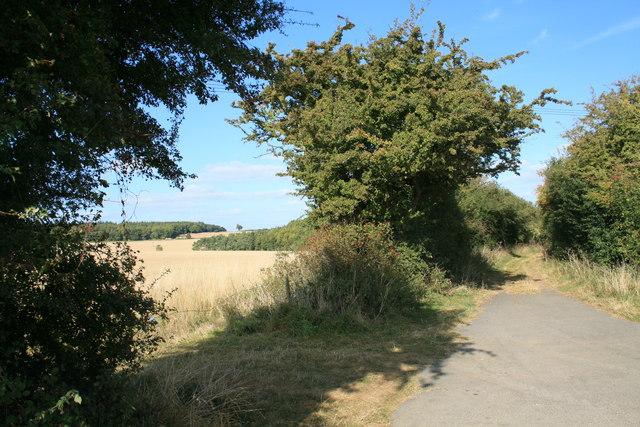 Track to Handley Plain