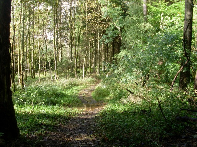 Forest path near Low Craigton