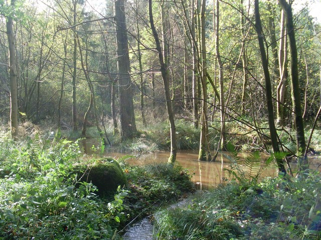 Flooded trees in woods near Craigton