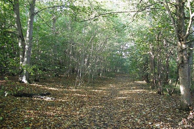 Woodland path, Cammo Park