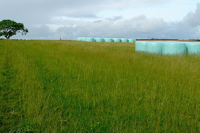 Fields at Wooden Farm