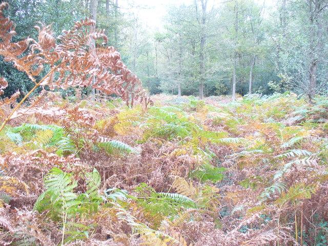Autumn in Durfold Wood