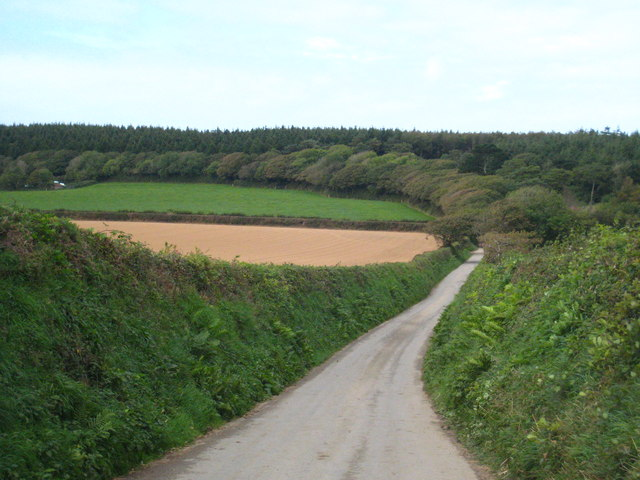 The road to Ladock Wood